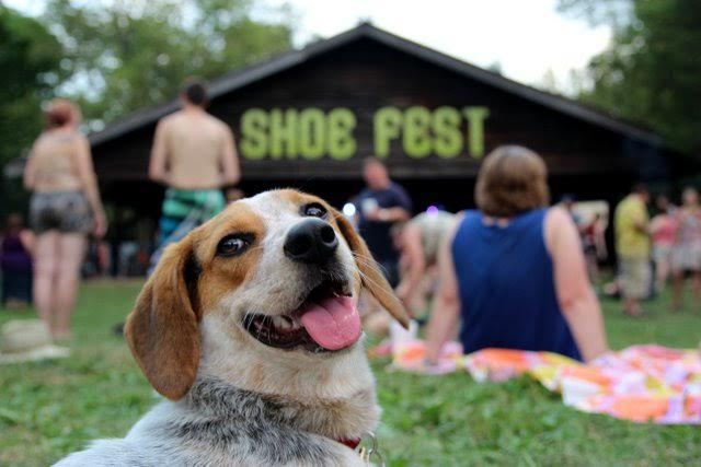 A Dog's Eye View Of Shoe Fest